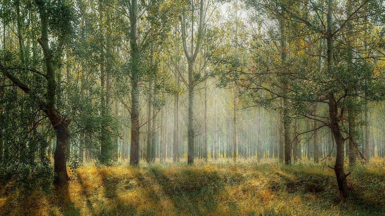 Why Forestry Work is More Important Than Ever